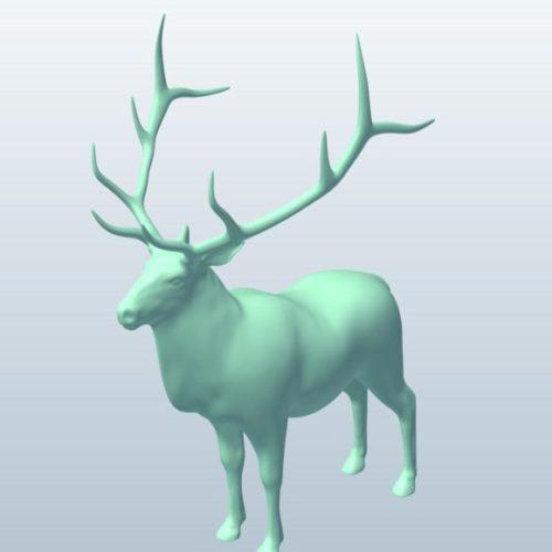 Elk Deer