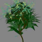Tree Plant 14