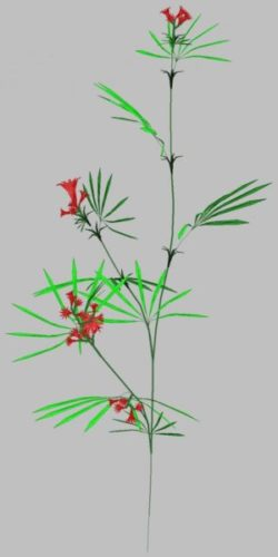 Landscape Flower 05