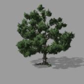 Tree_alan-2