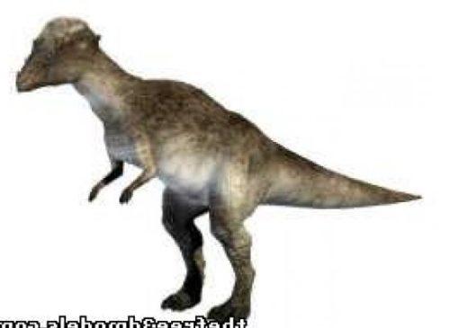 Pachycph Dinosaur