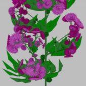 Purple Crisantemum