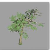 Pine Tree Short
