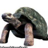 Big Tortoise (turtle)