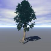 Scotts Pine