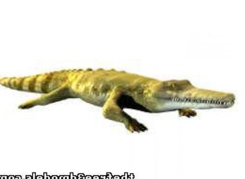 Aligator Crocodile