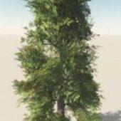 Broad Leaf Straight Trunk Tree
