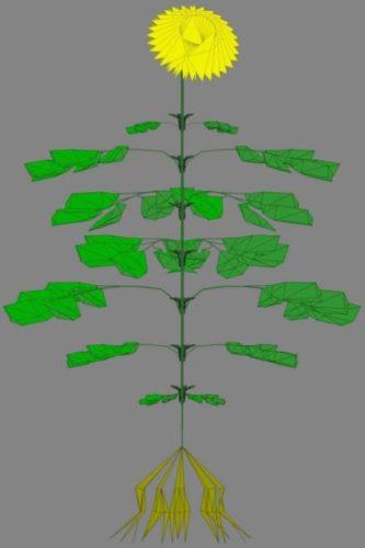 Tree Flower 10