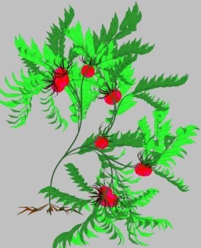 Nature Plant 06