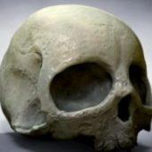 High Poly Human Skull