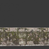 Old Wall With Leaves