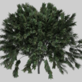 Realistic Tree Tropical