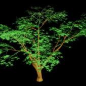 Nature Cartoon Tree