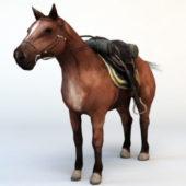 Wild Horse With Saddle