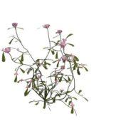 Nature Green Pink Flowering Herb V1