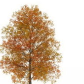 European Autumn Poplar Tree V1