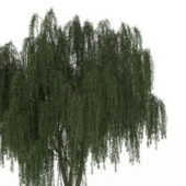 Green Weeping Willow Tree