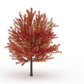 East Asia Autumn Maple Tree