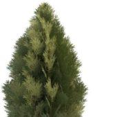 Leyland Cypress Green Tree