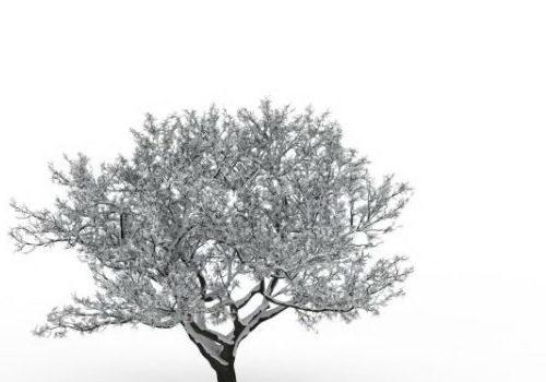 European Nature Winter Snow Tree
