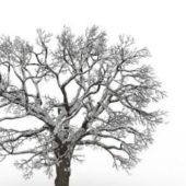 European Snowy Bare Tree