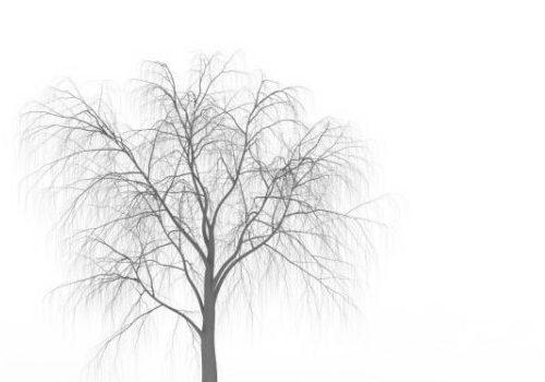 Western Winter Tree