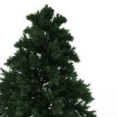 Green Leyland Cypress Tree