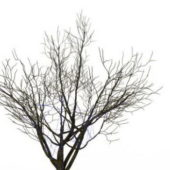 Dry Branches Winter Tree