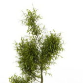 Green Willow Tree