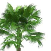 California Green Fan Palm Tree
