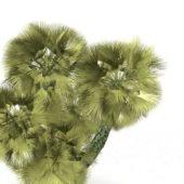 Green Coniferous Pine Tree