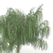Park Weeping Willow Tree V1