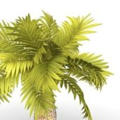 Island Coconut Palm Tree