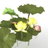 Pond Lotus Flower Leaves