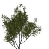 Nature Babylon Willow Tree