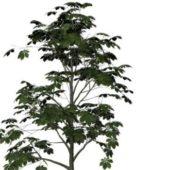 Nature Horse-chestnut Tree