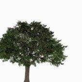 Nature Cypress Tree V1