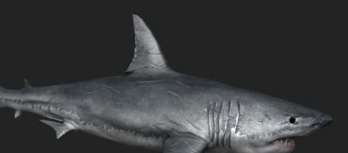Realistic Great White Shark