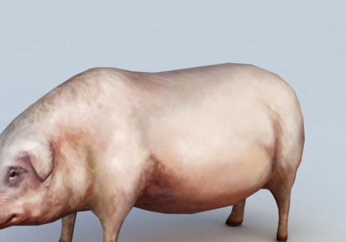 Animal Domestic Pig