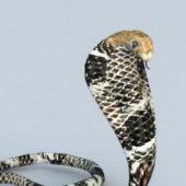 King Cobra Snake Animal