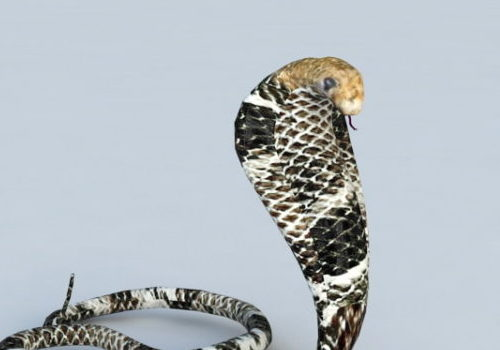 King Cobra Snake Animal