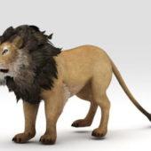 Abyssinian Lion Wild Animal