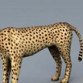 Cheetah Rigged