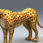 African Cheetah Animal