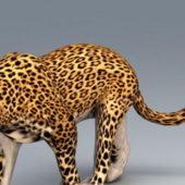 Wild Animal African Leopard
