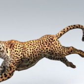African Leopard Animated Rigged Character