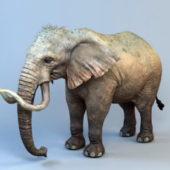 Animal Mammoth Elephant