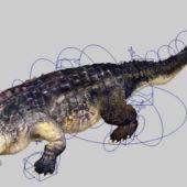 Animated Alligator Animal Rigged