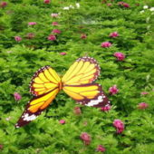 Yellow Butterfly Animated