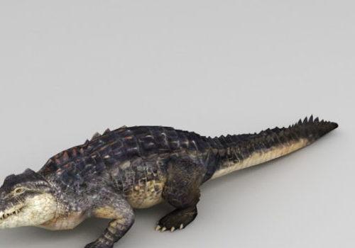 Realistic Animated Crocodile